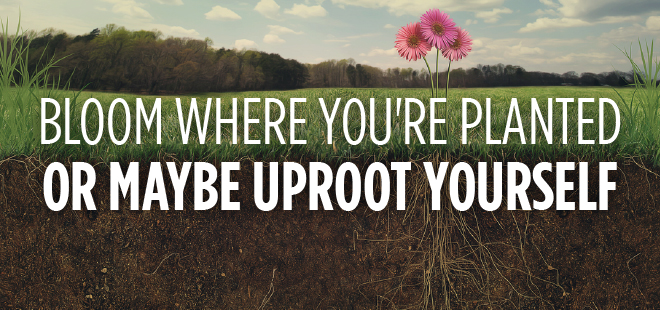 Bloom Where You're Planted – Or Maybe Uproot Yourself